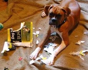 Dog chewed textbook
